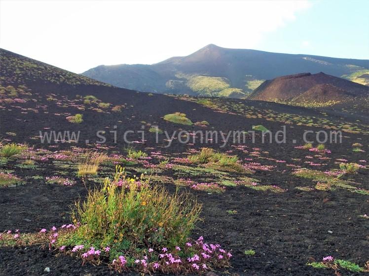etna - flowers